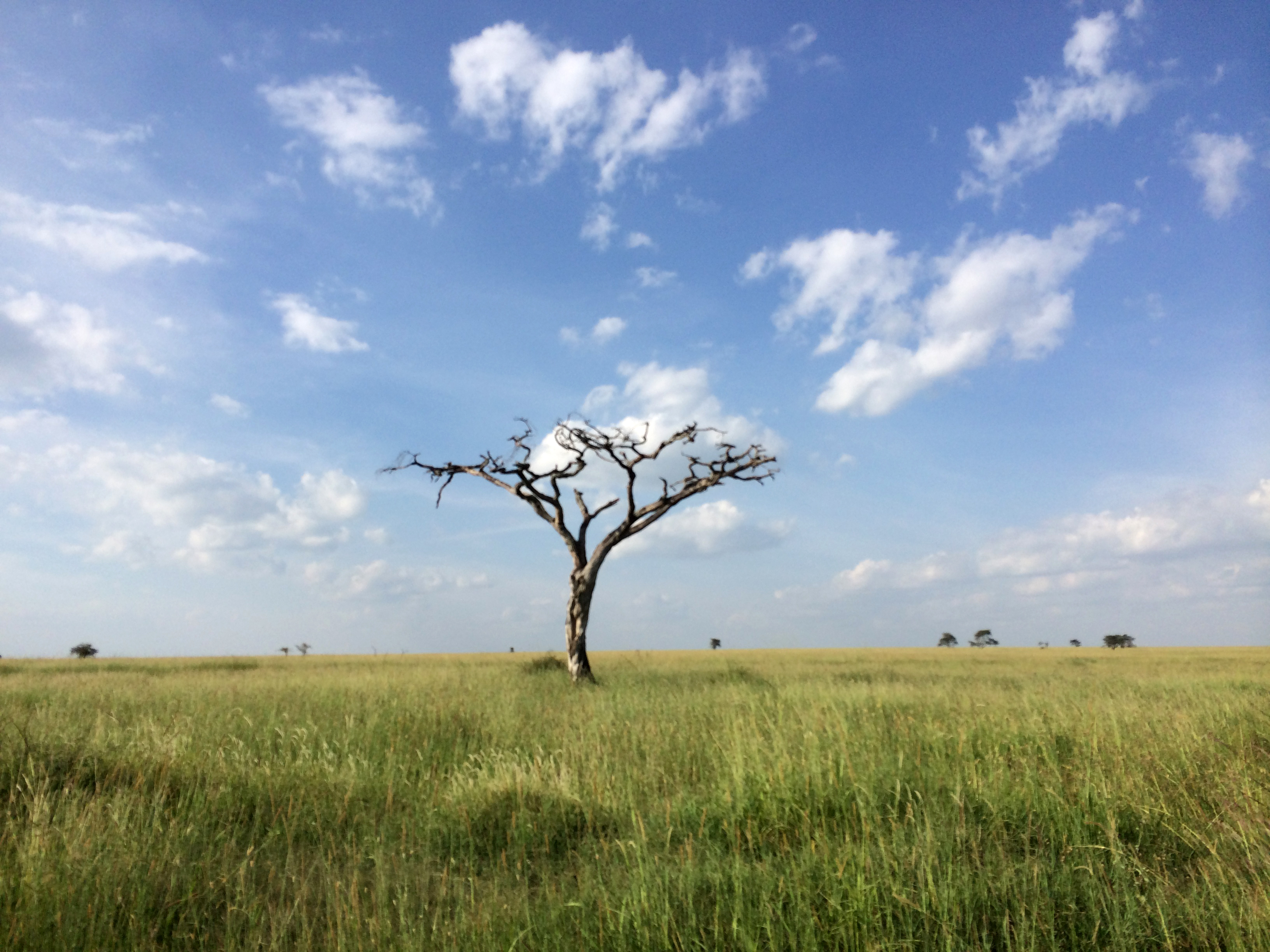 Serengeti National Park | Photo by Wilson Carletti (All Rights Reserved)