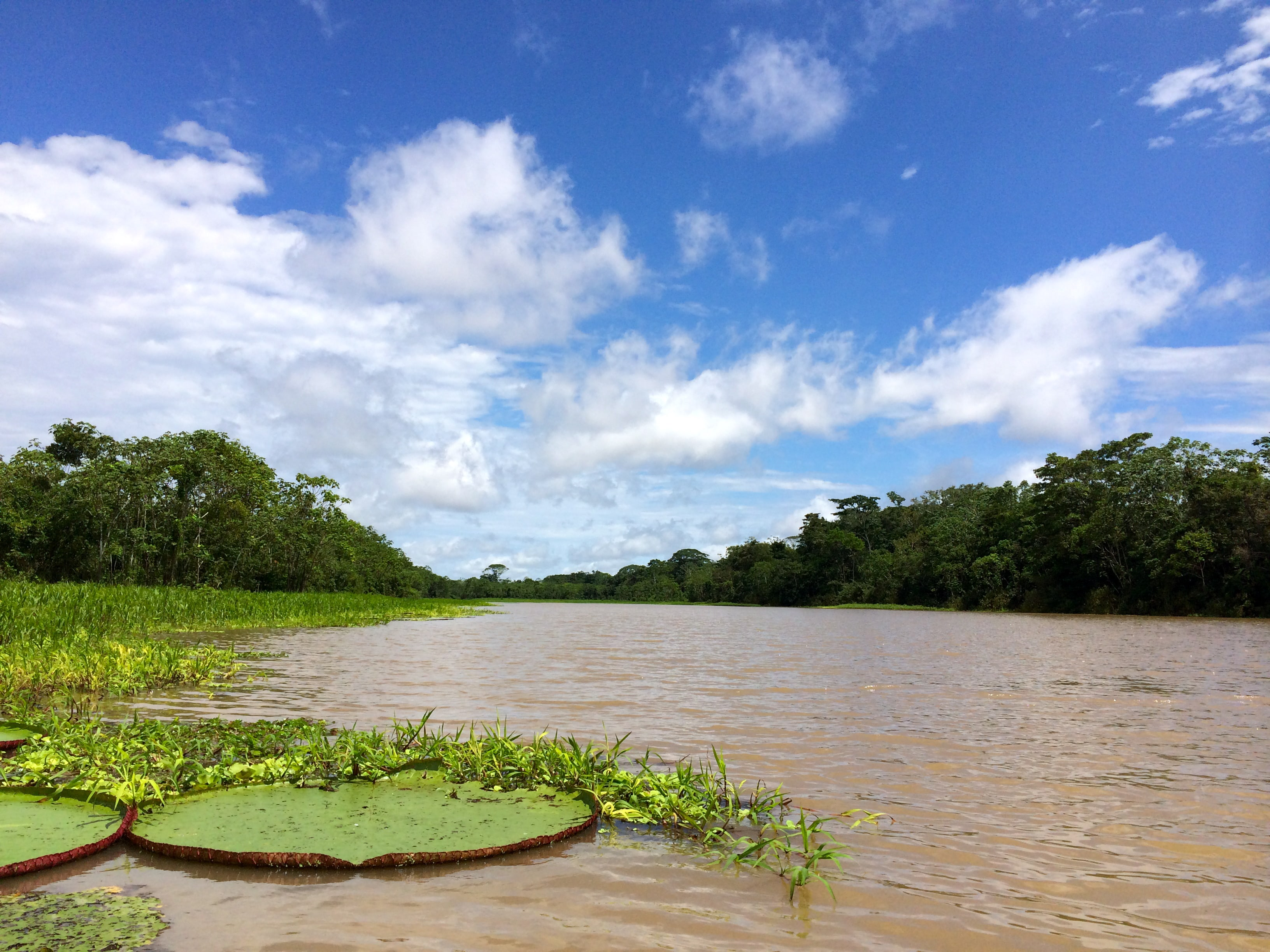Amazon River   Photo by Wilson Carletti (All Rights Reserved)