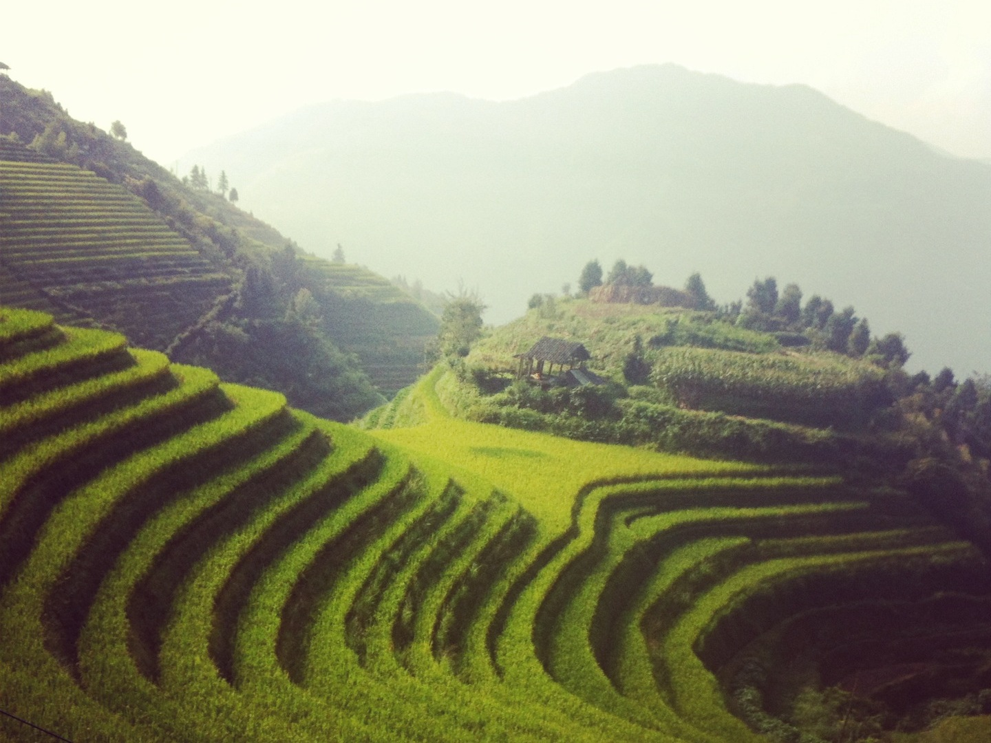 Longji Rice Terraces | Photo by Wilson Carletti (All Rights Reserved)