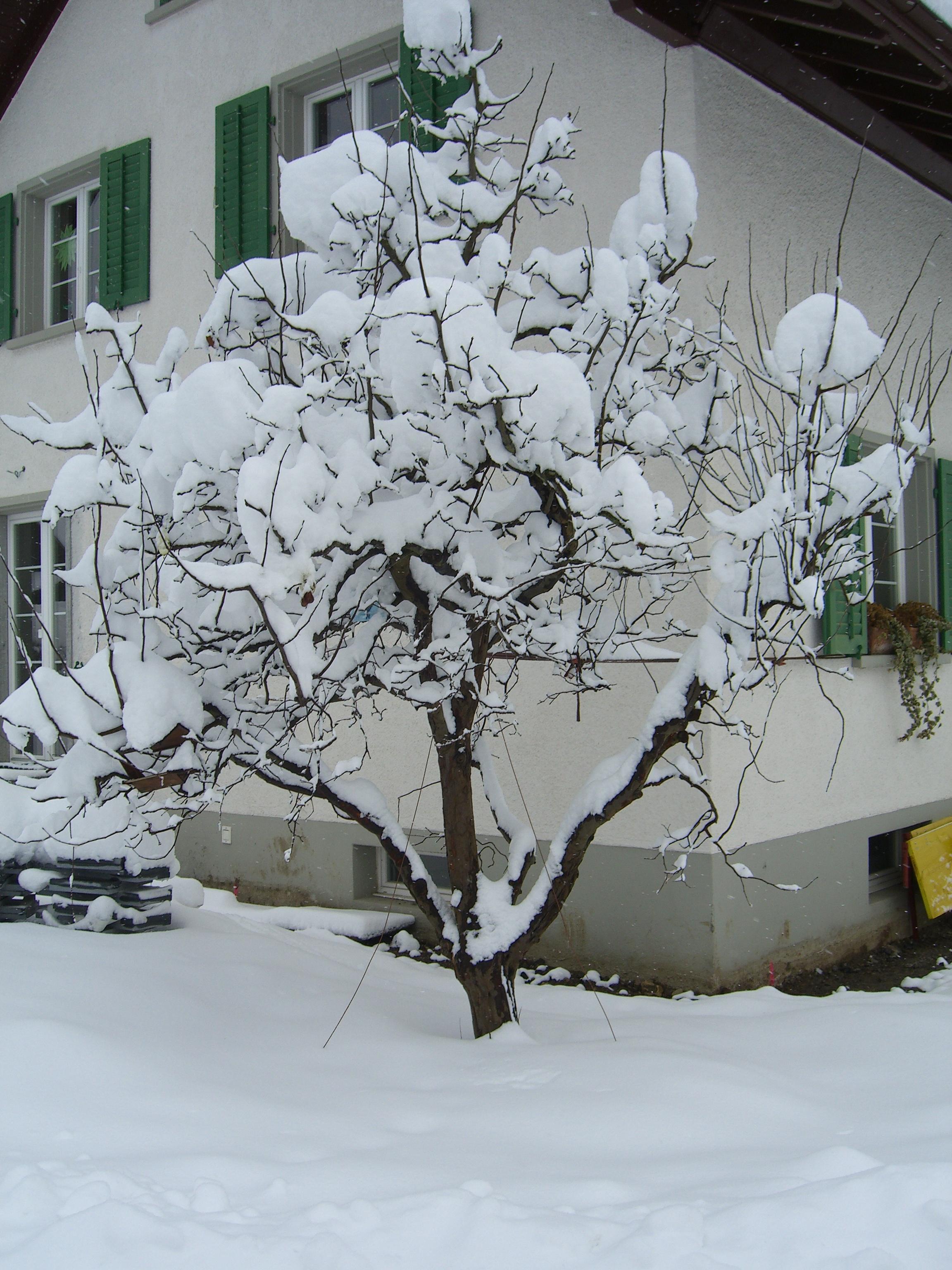 schneeräumen parisini