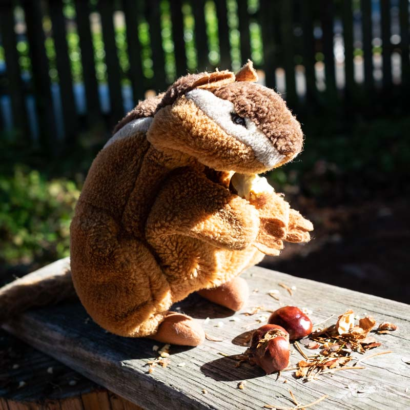 A chipmunk puppet eating chestnuts