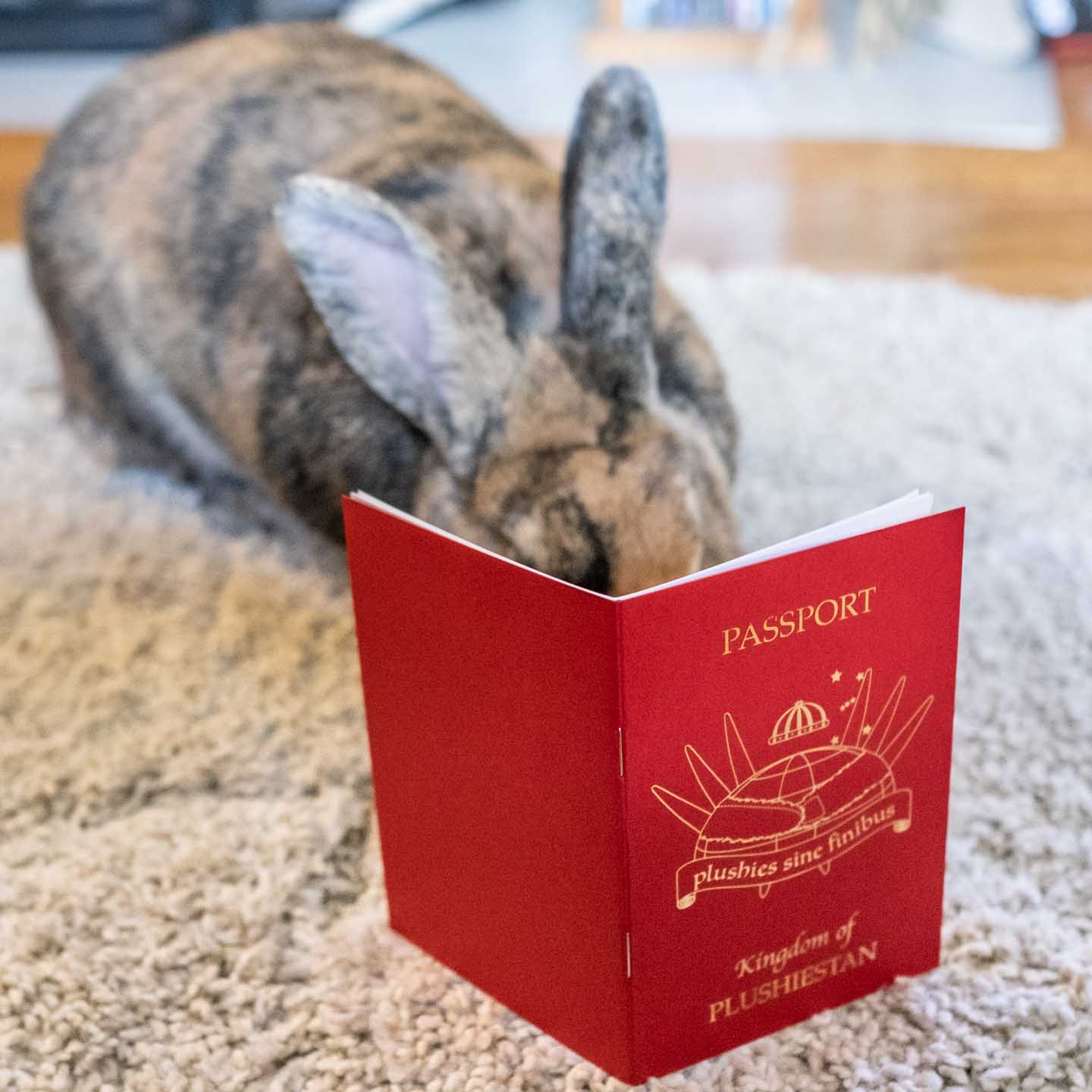 Rabbit sniffing a Plushiestan passport