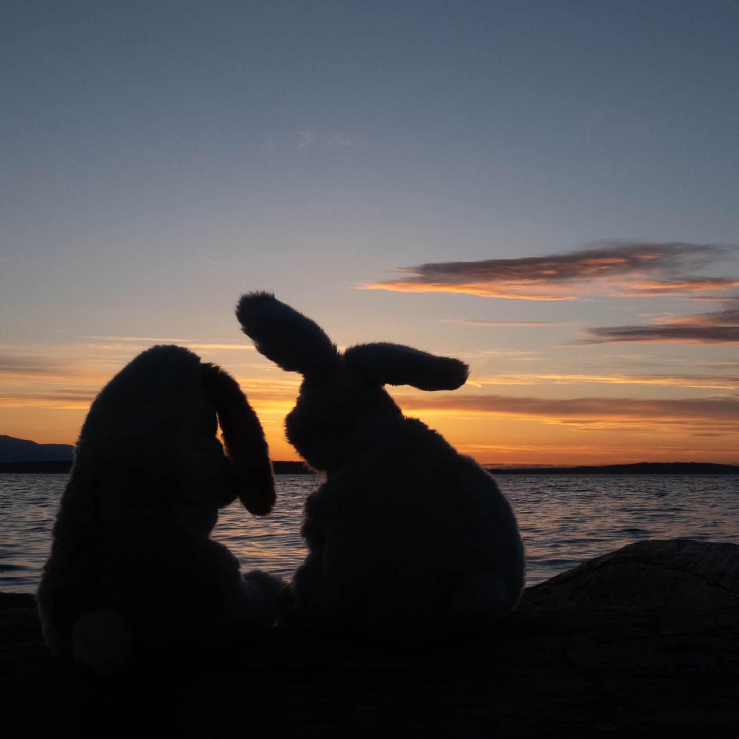 Pair of stuffed animal bunnies silhouetted against an ocean sunset