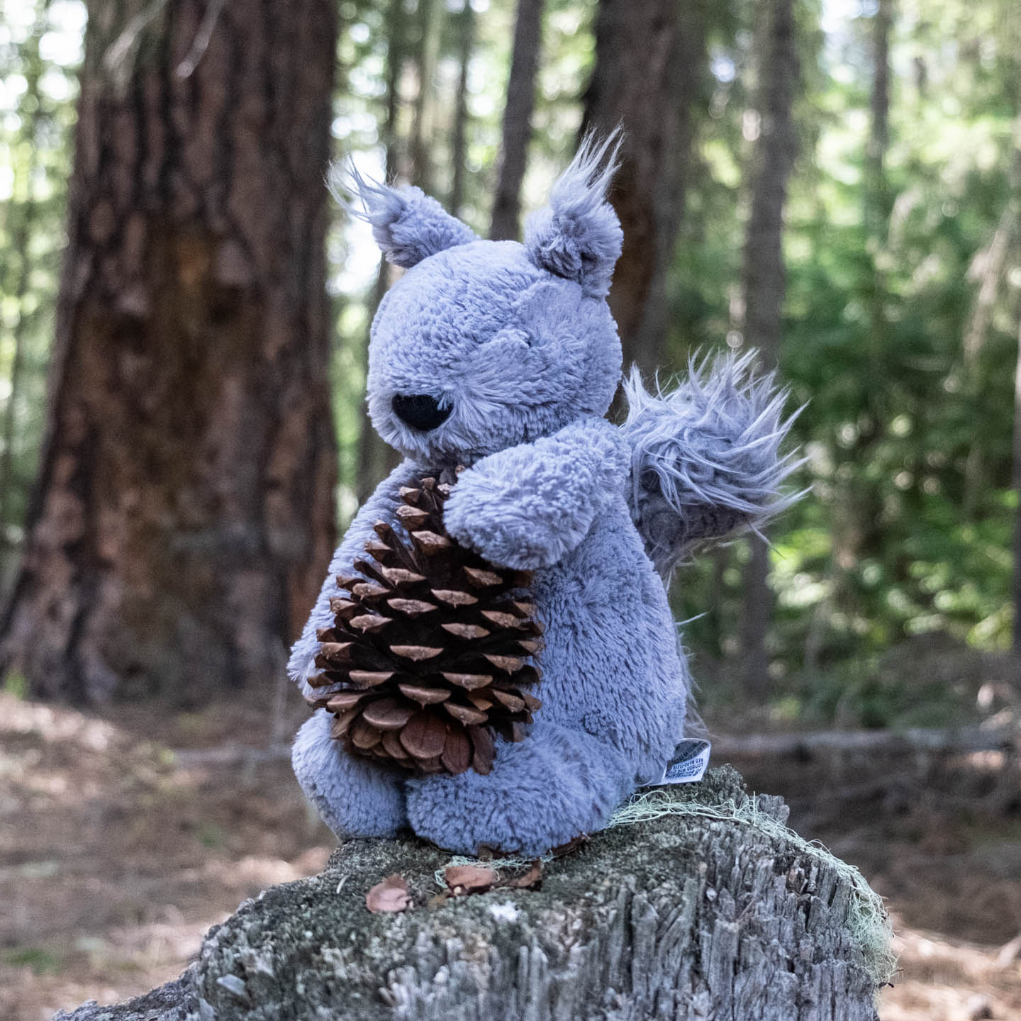 Plush squirrel holding a pinecone