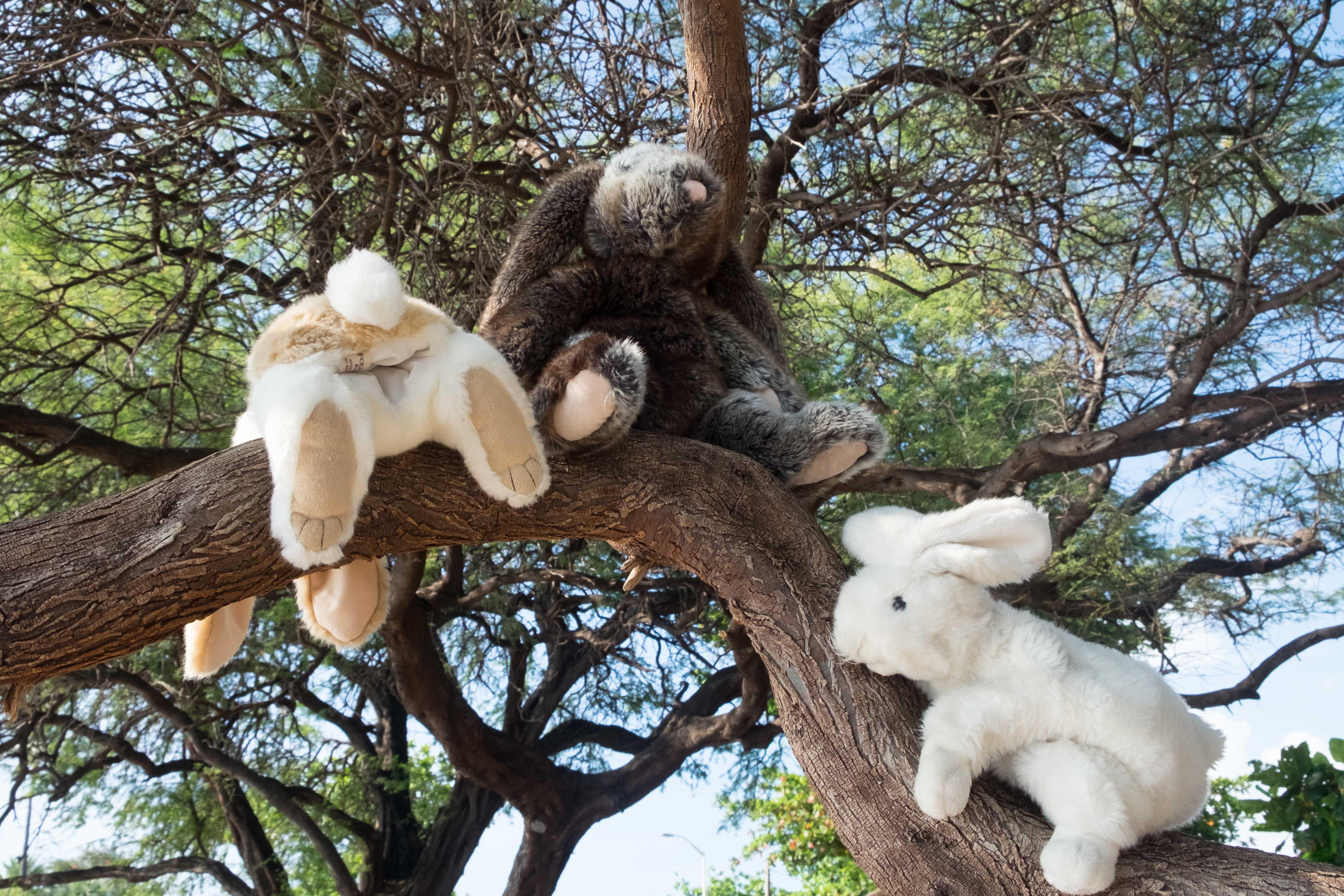 Stuffed bunnies climbing a tree