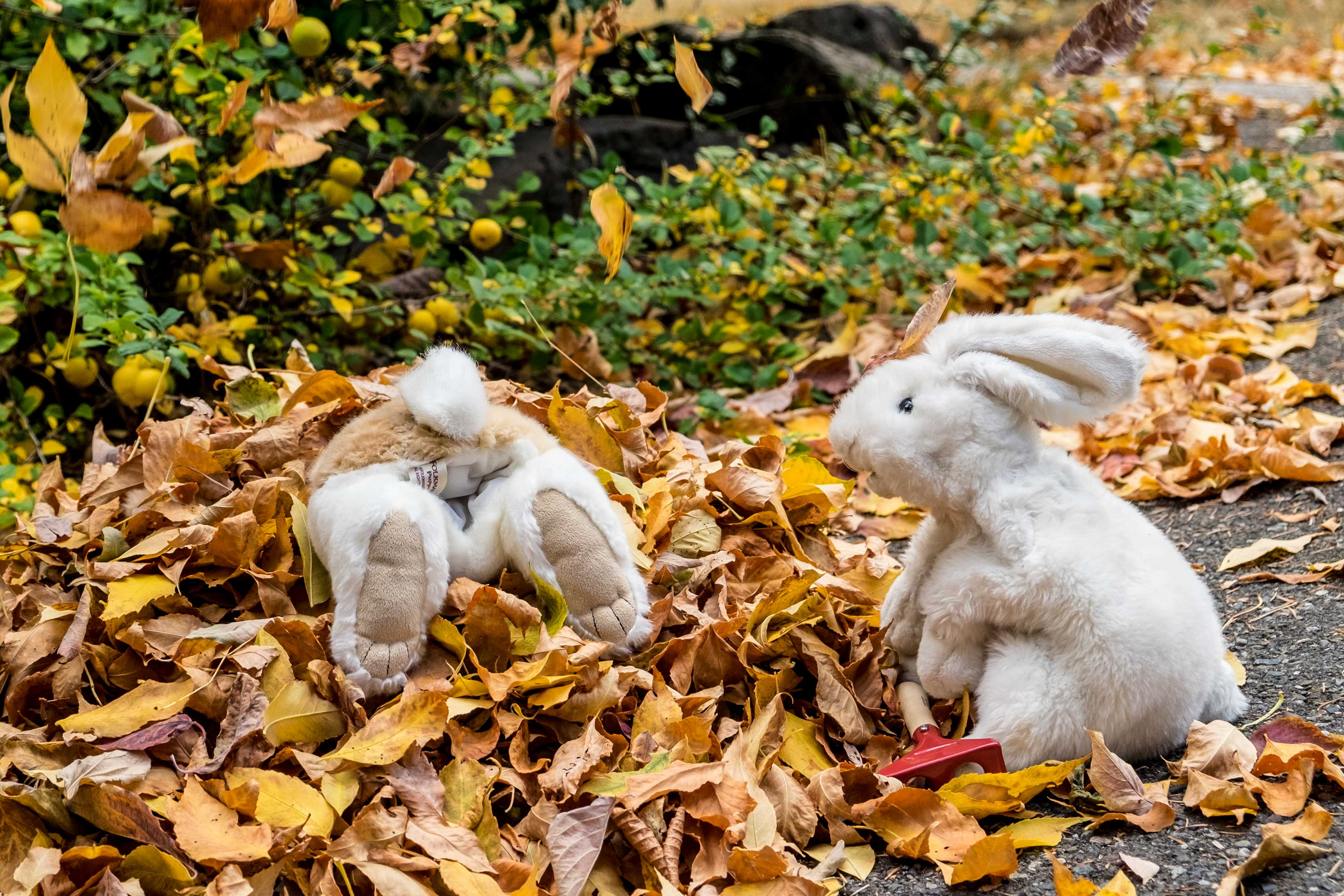 puppet bunnies jumping in leaves
