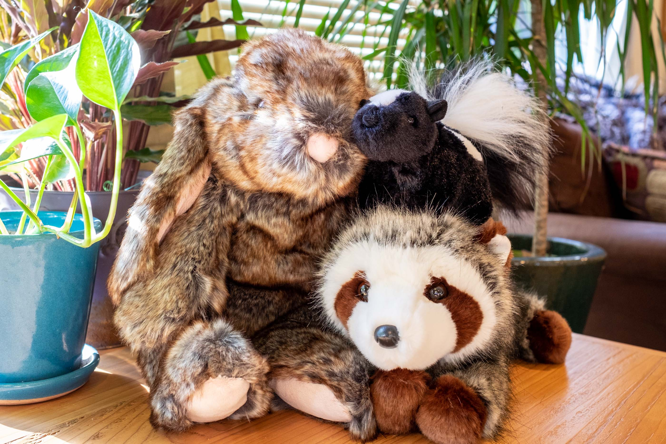 trio of stuffies available for adoption