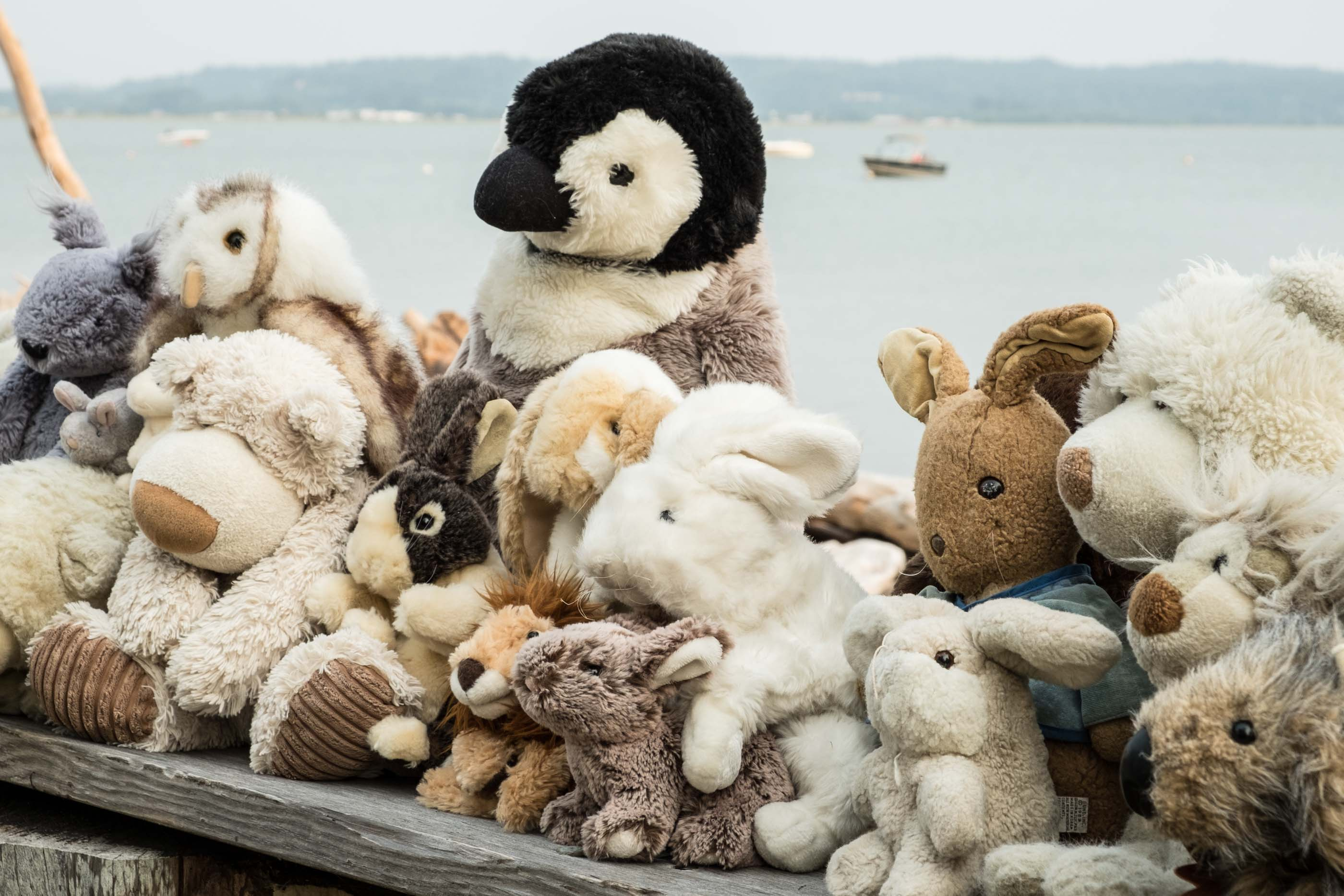 group of stuffed animals ready for adoption