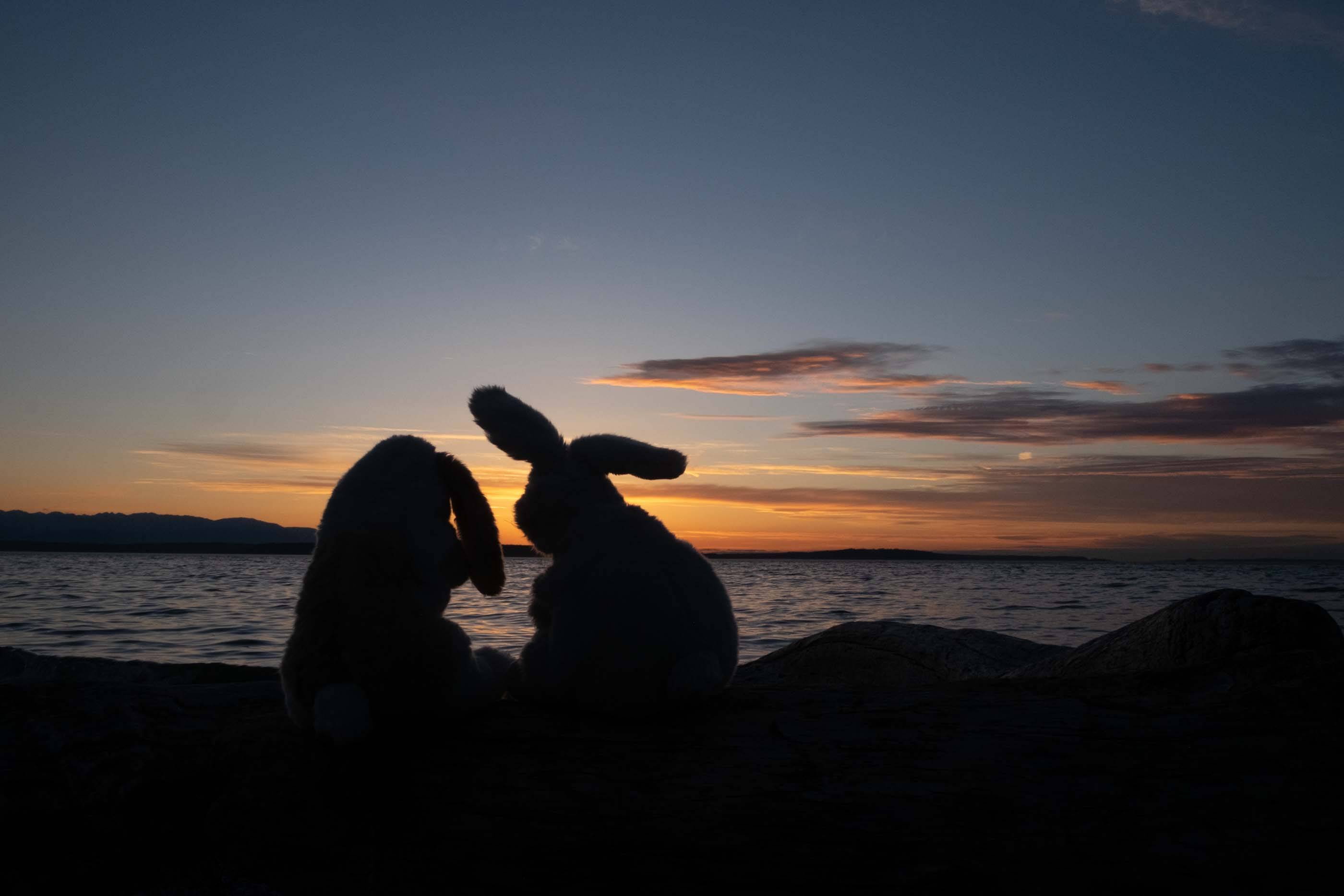 stuffed bunnies sunset silhouette