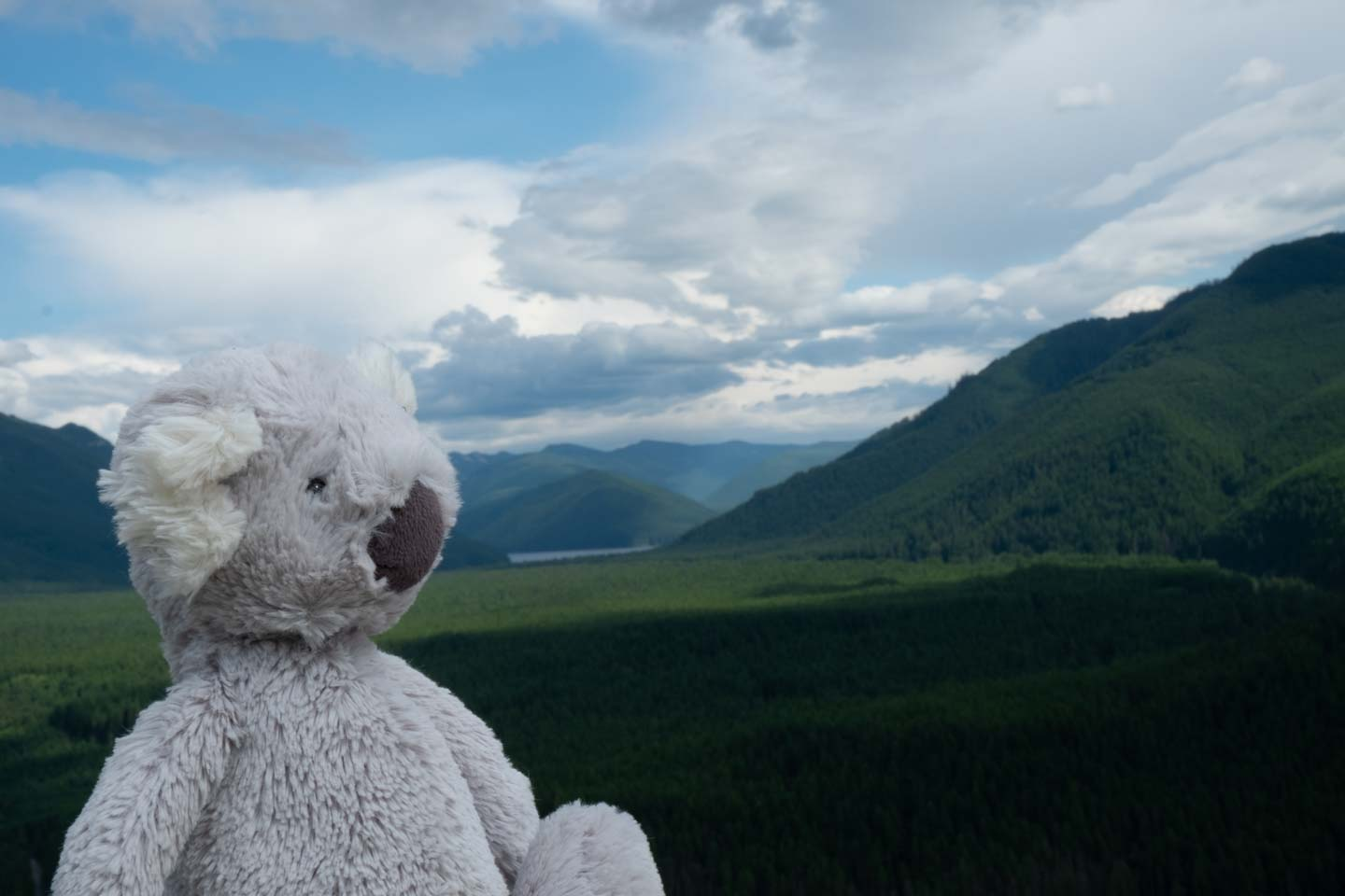 plush koala in the mountains