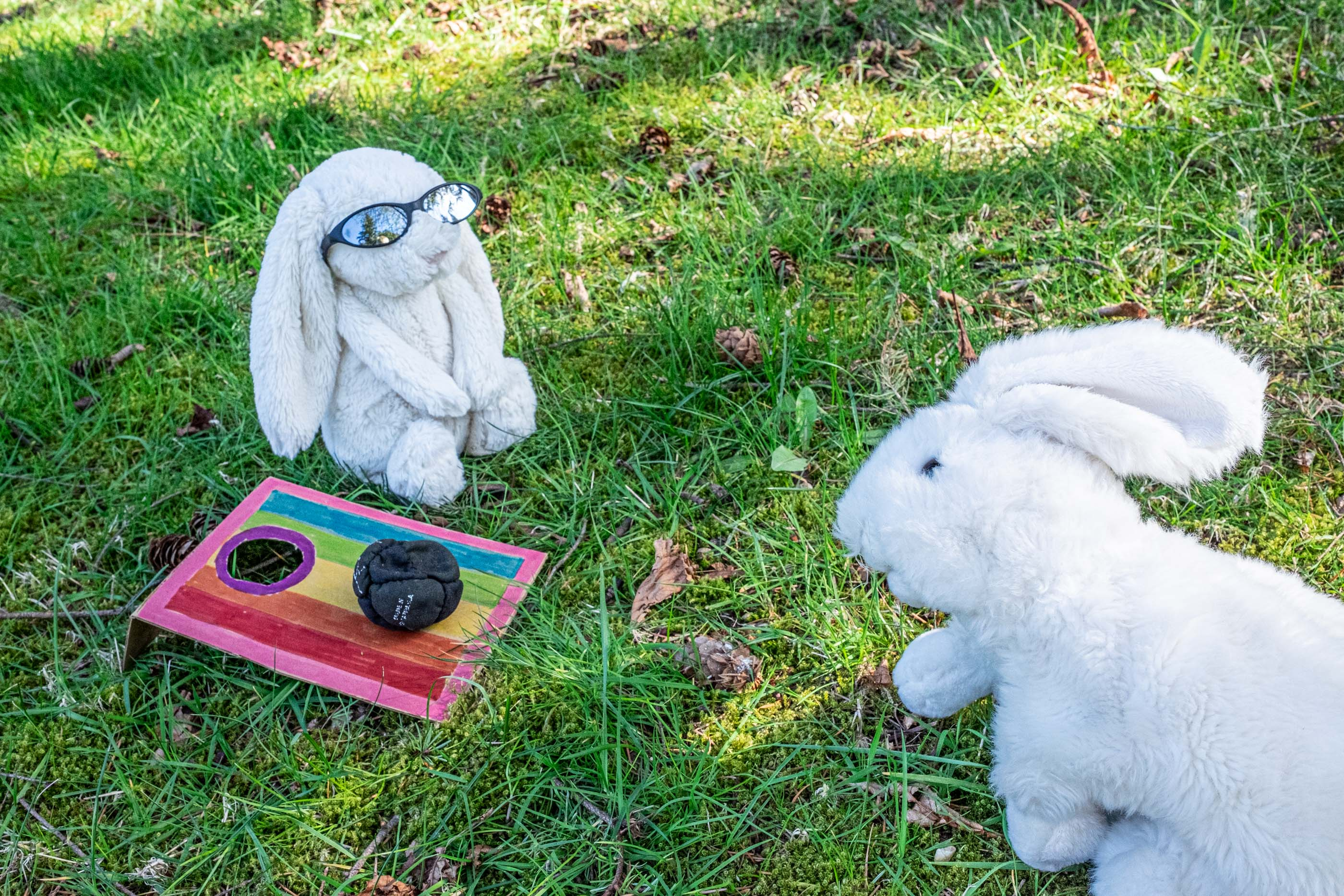 bunnies playing cornhole