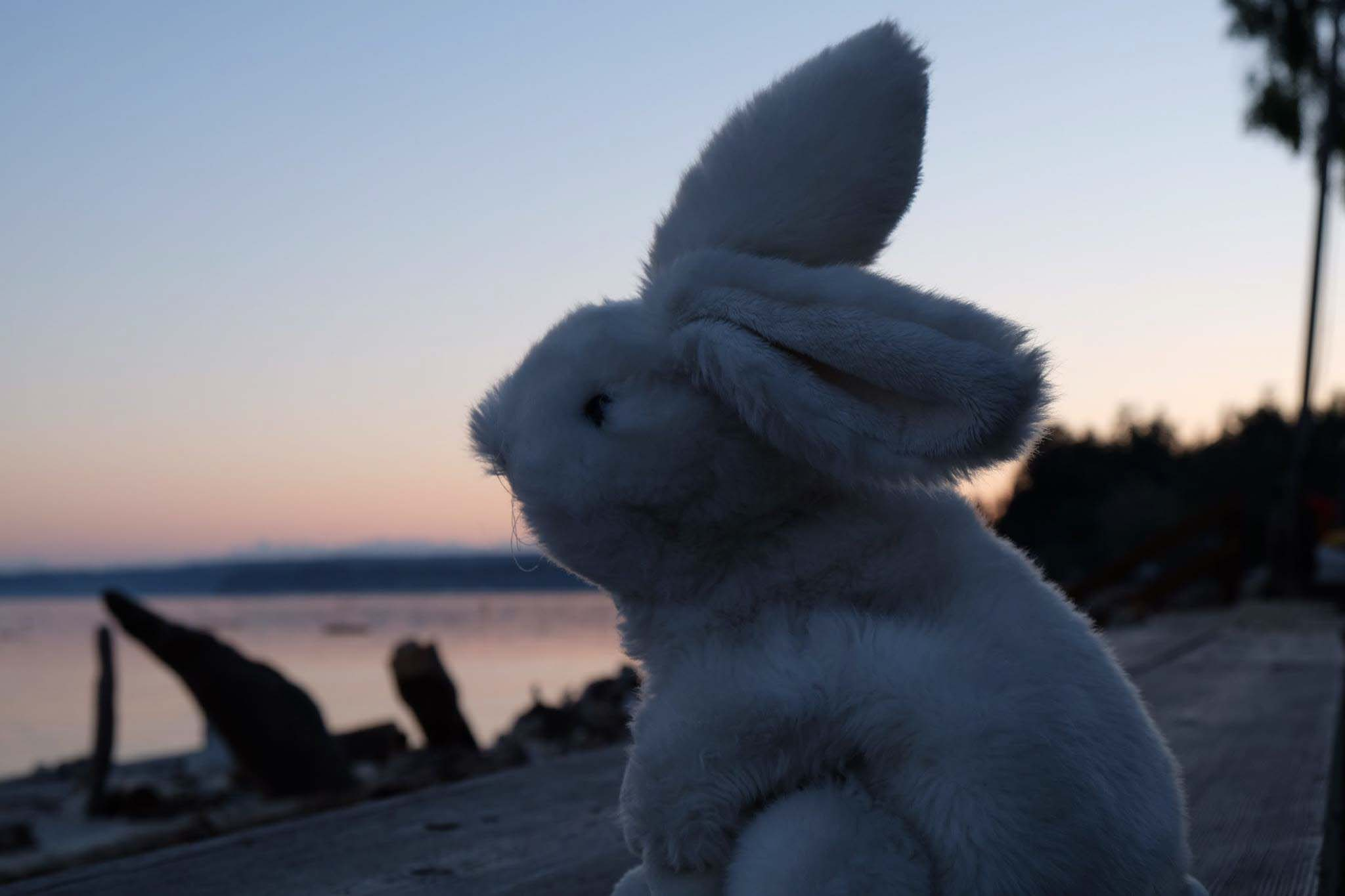 White bunny puppet with a beach sunset