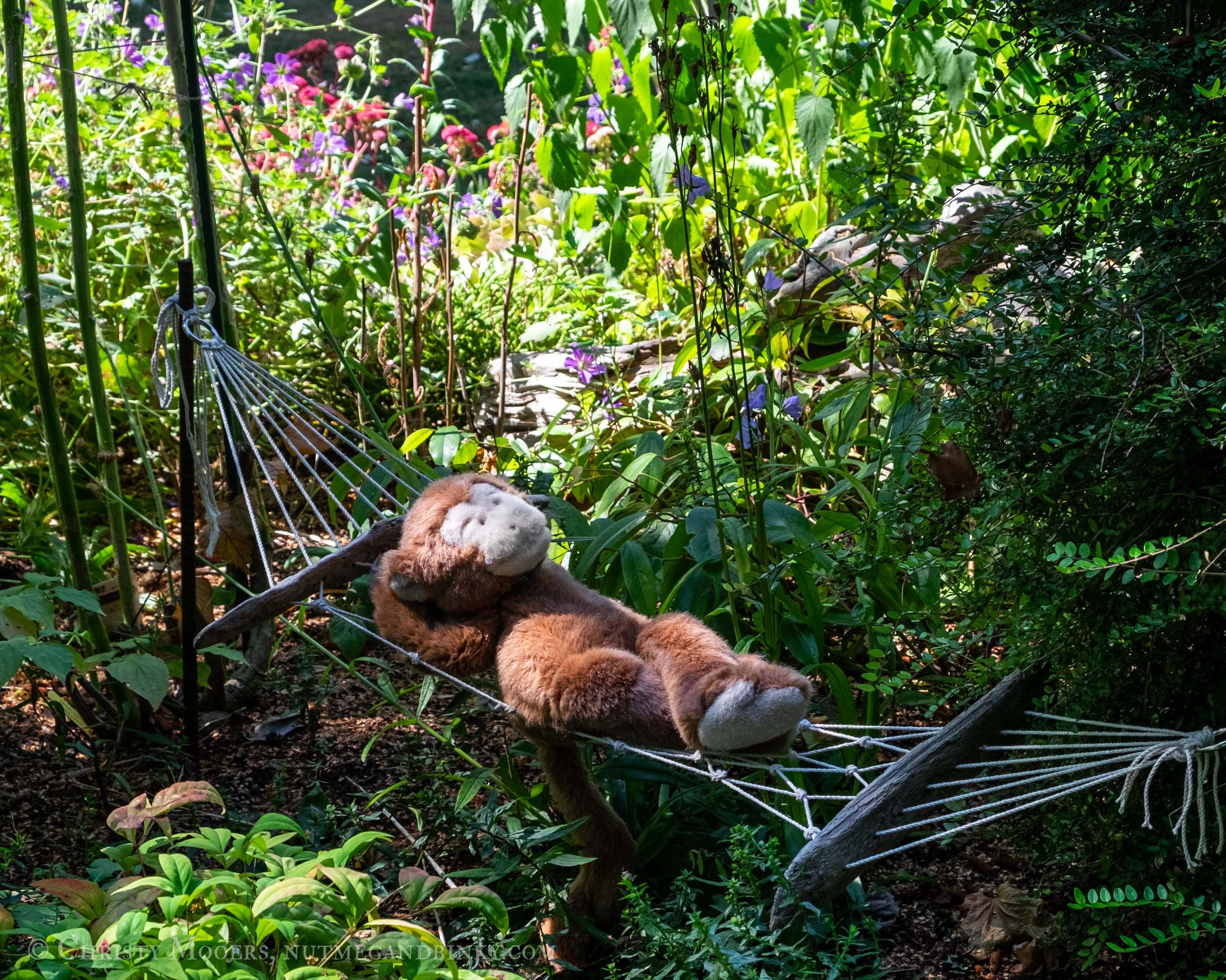 stuffed animal monkey swinging in a tiny hammock in a lush garden