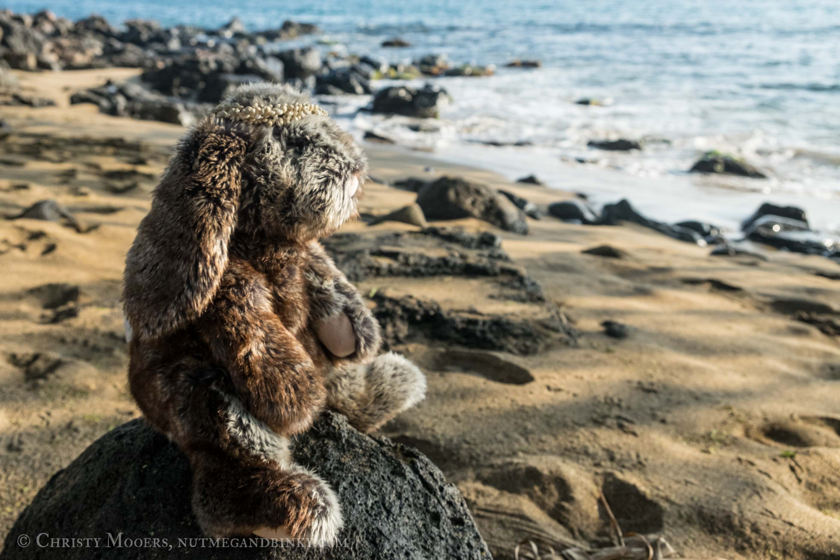 Stuffed animal bunny sitting on a rocky and gazing out at the ocean