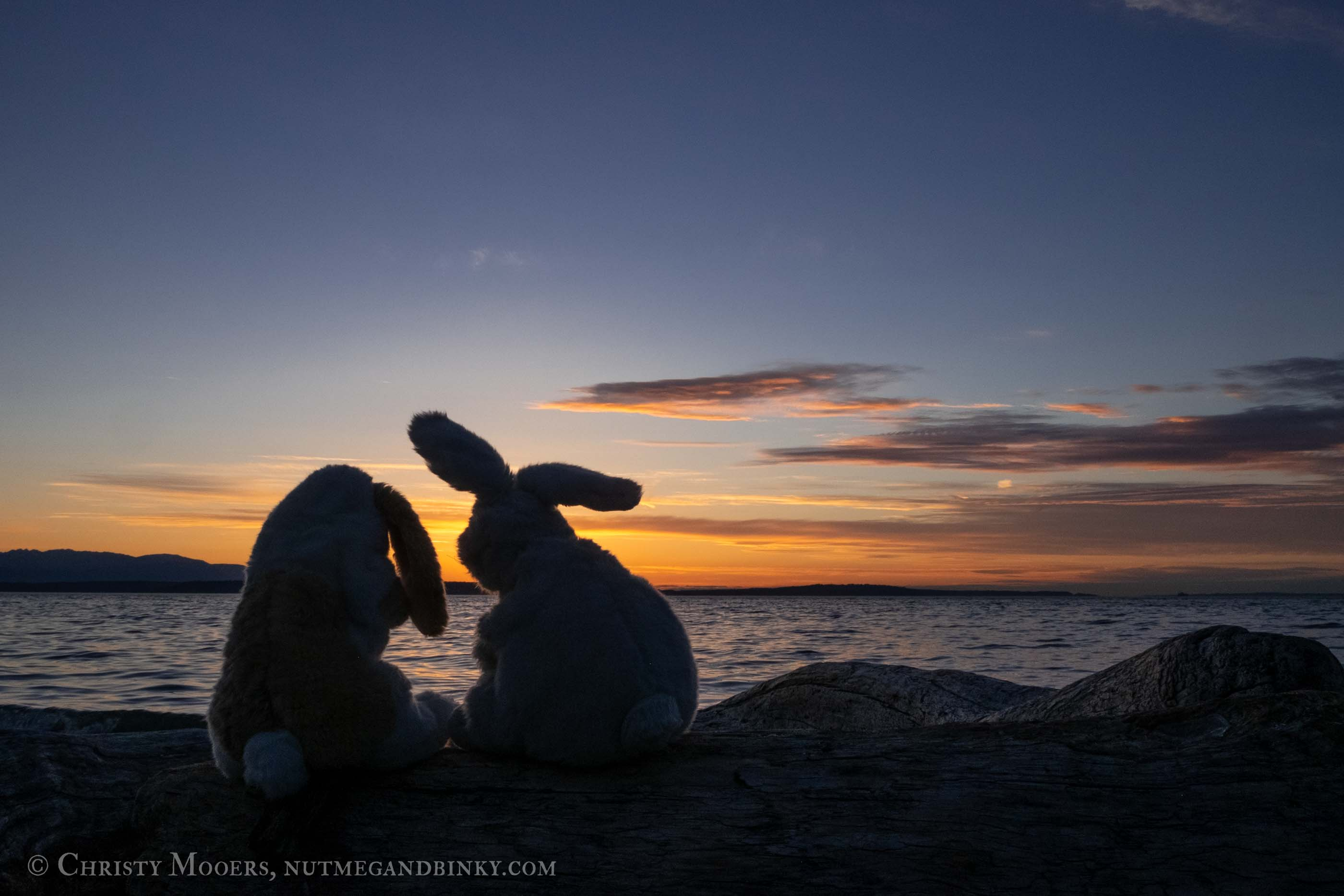 Plush bunnies silhouetted on a log watching the sun set over the ocean