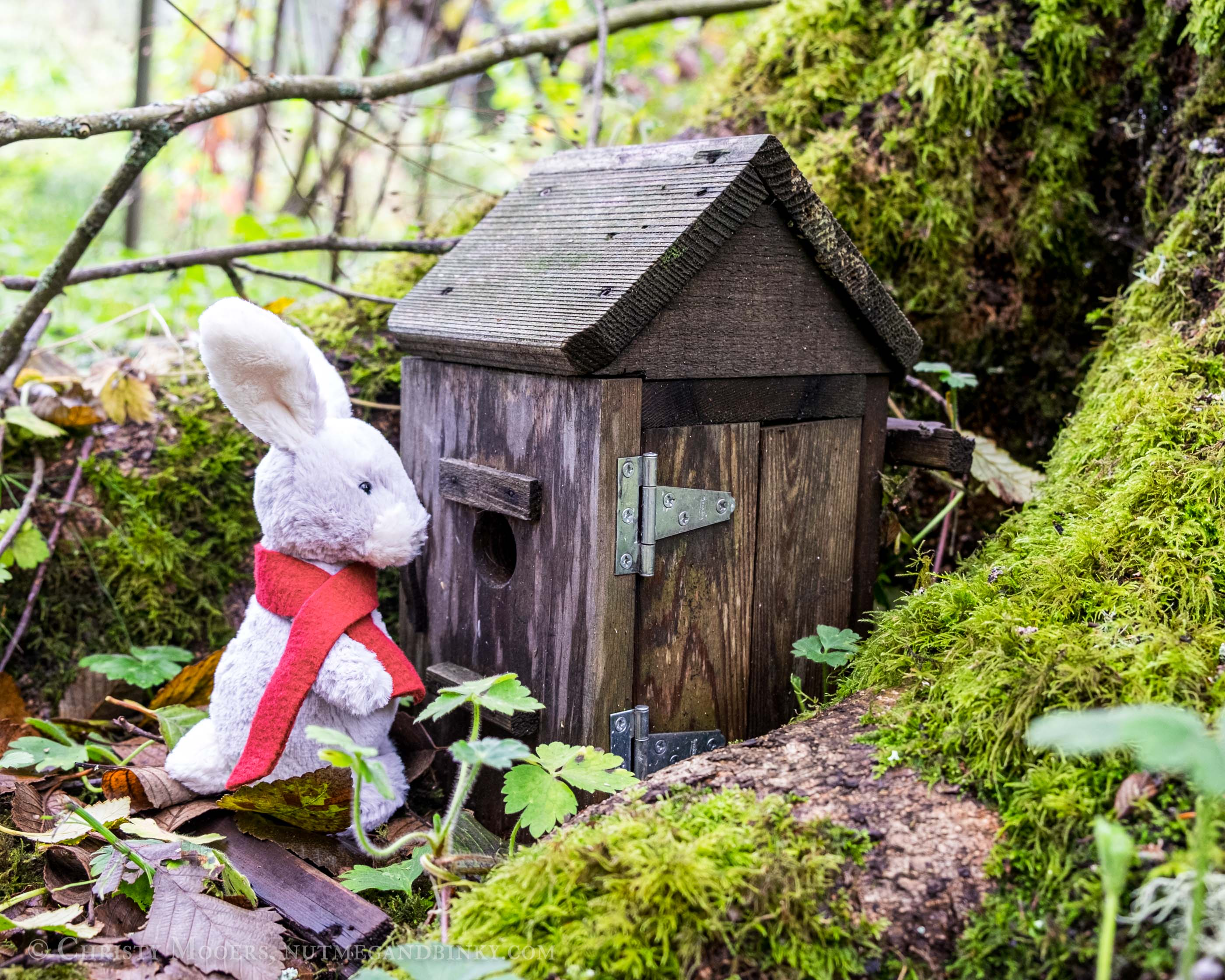 stuffed animal bunny wearing a scarf and visiting a birdhouse between the roots of a mossy tree