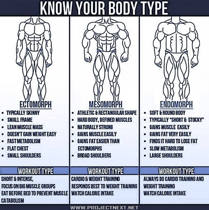 Image result for ectomorph body types projectnext