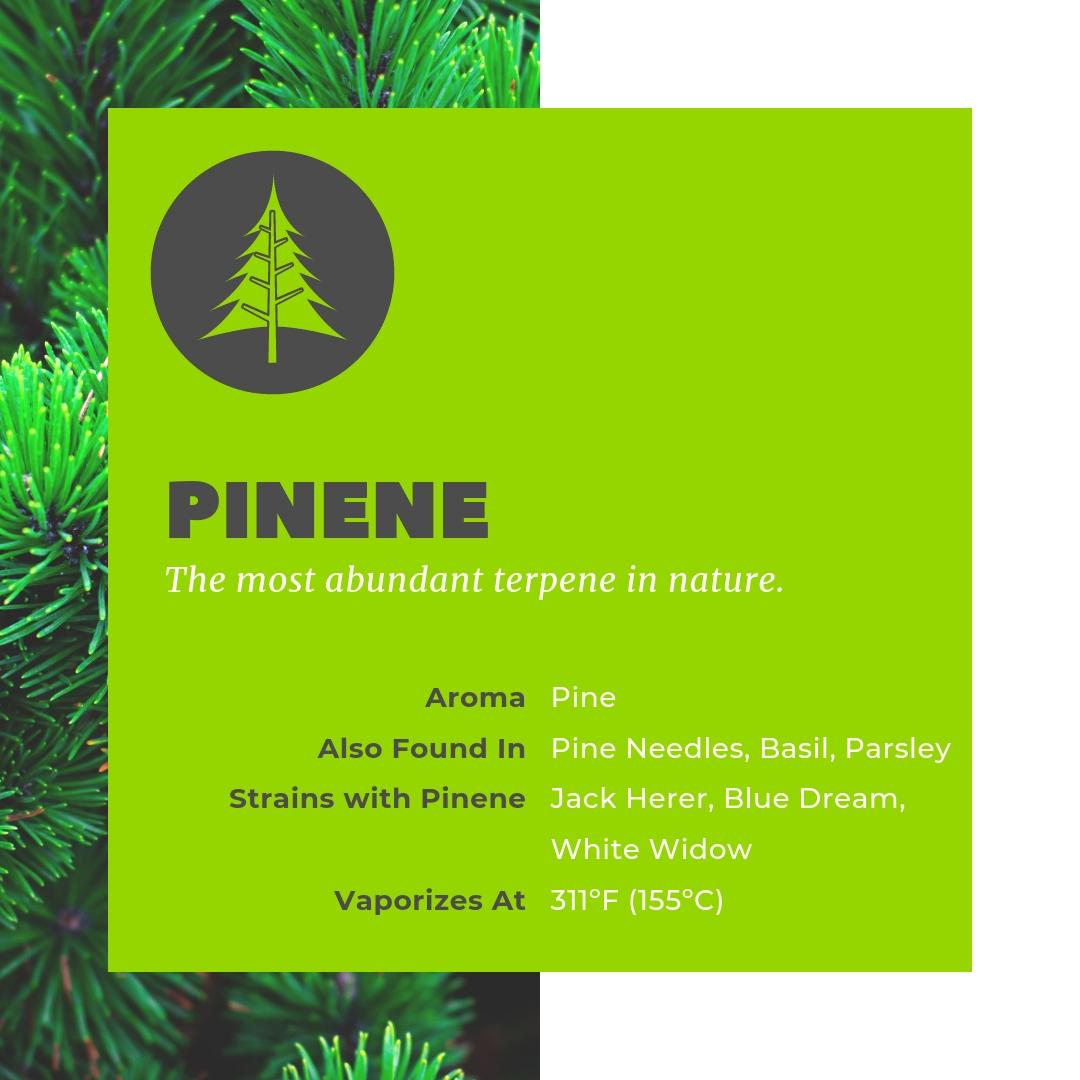 Pinene is the most abundant terpene in nature.