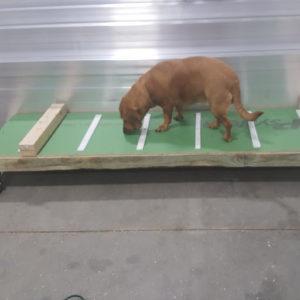 Shop-dog