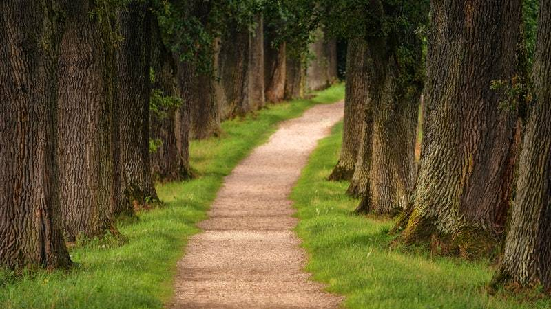 How to Invest for Retirement: Pathway between trees