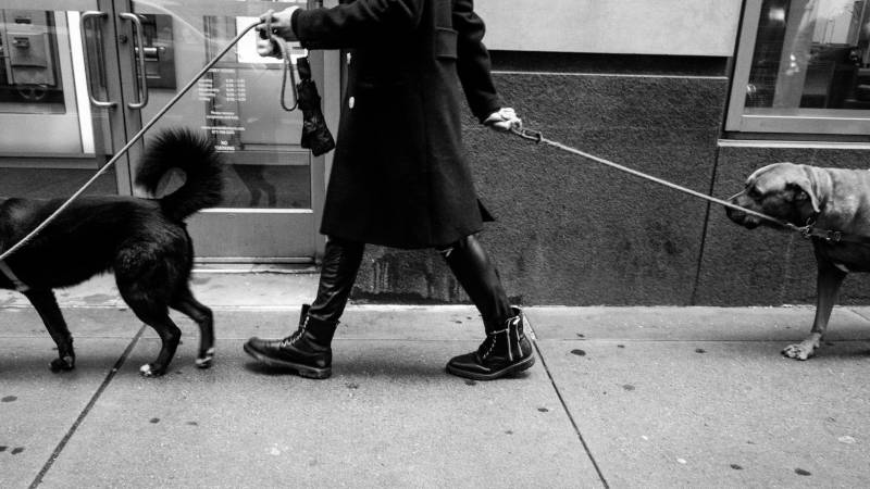 How Many Credit Cards Should I Have: Person walking dogs
