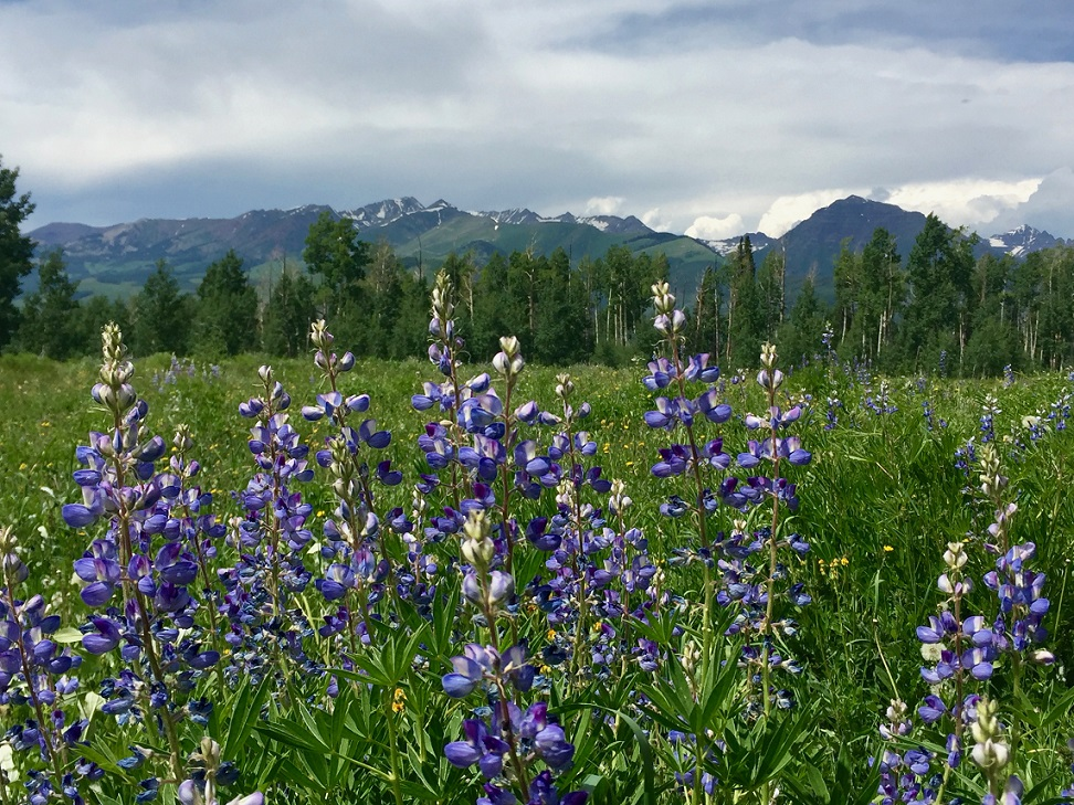 Mountains and Lupine
