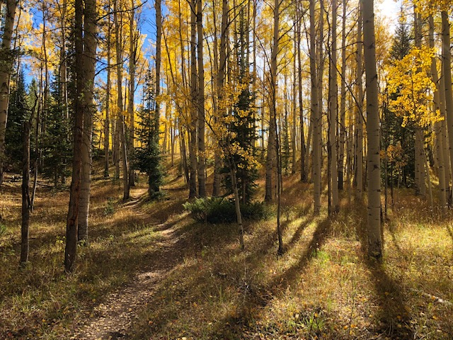 In the Aspens Strand Hill