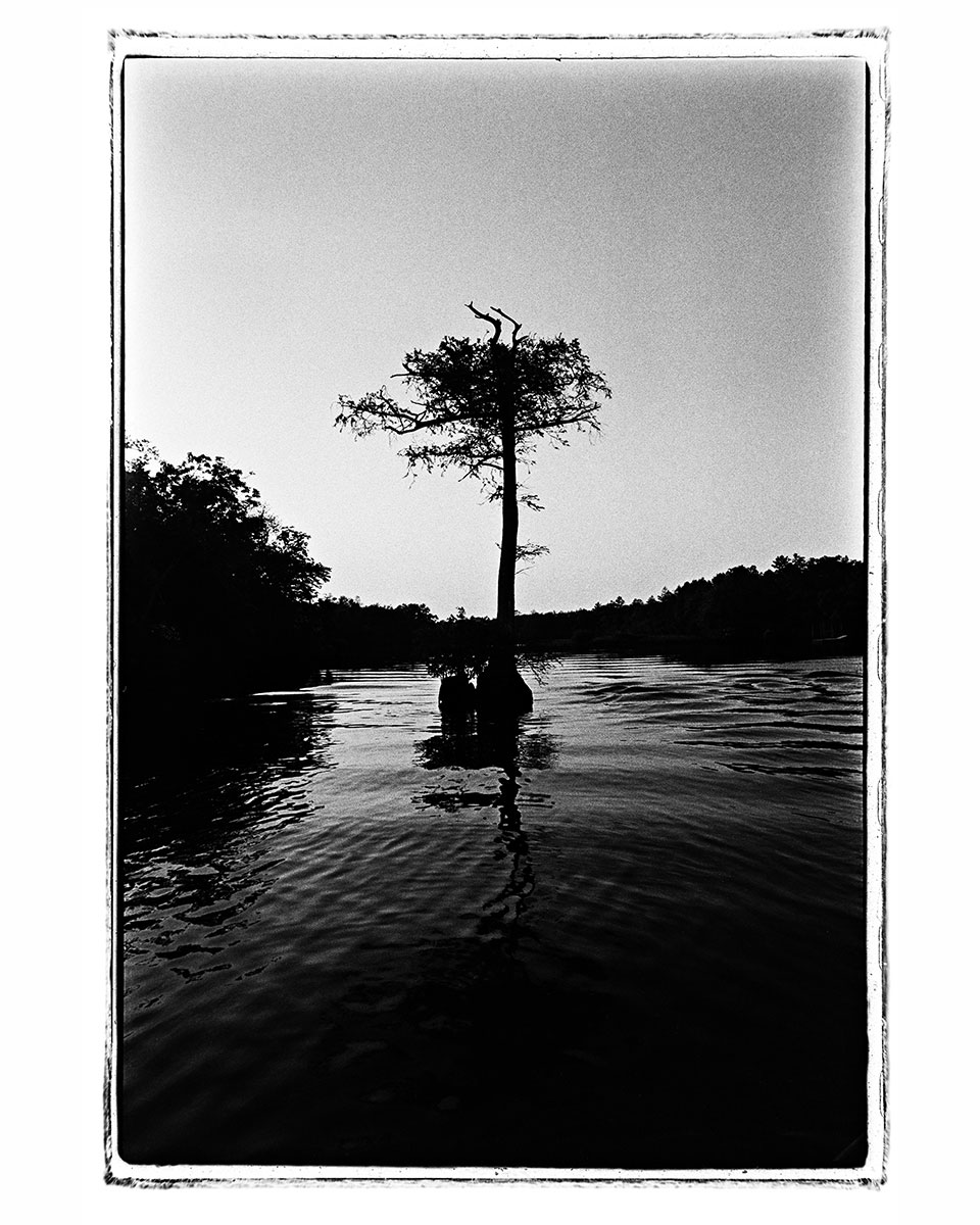 photo of cypress tree by Robert de Gast