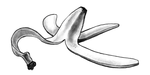Compostable Illustrated banana peel