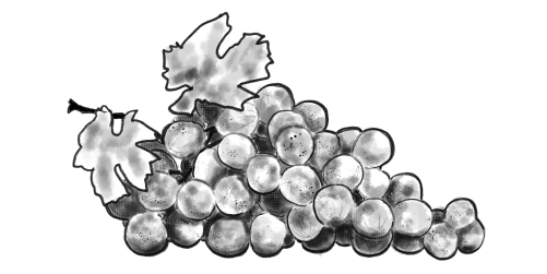 Compostable Illustrated grapes
