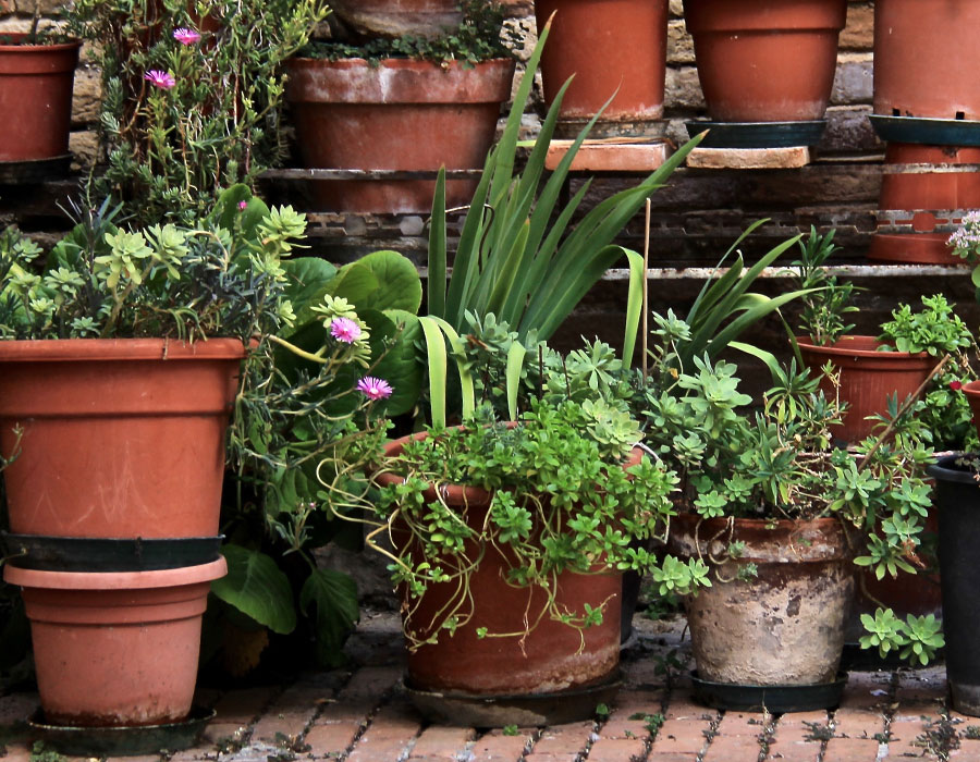 Terracotta and Ceramic Garden Pots