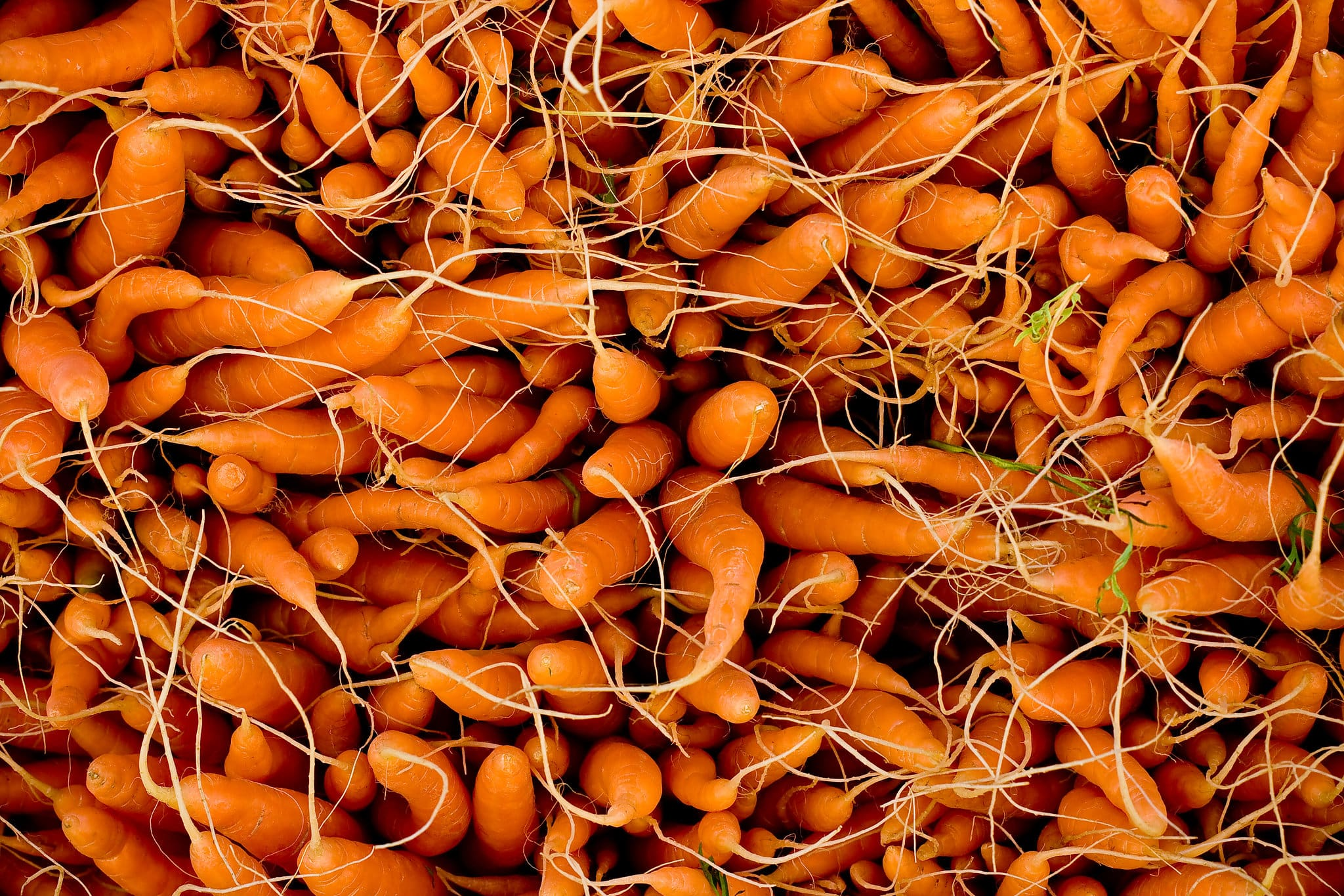 Carrots - Daniel Berman Photograhy