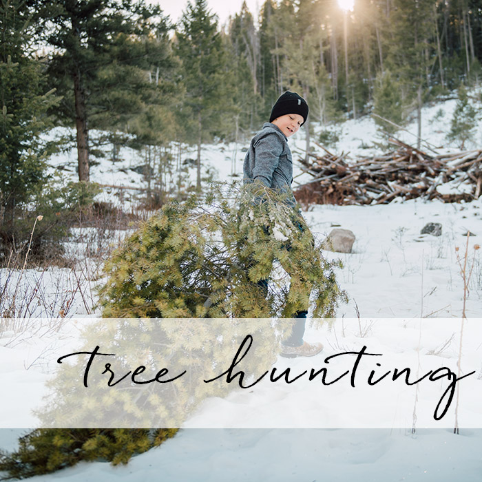 Tree Hunting Sessions