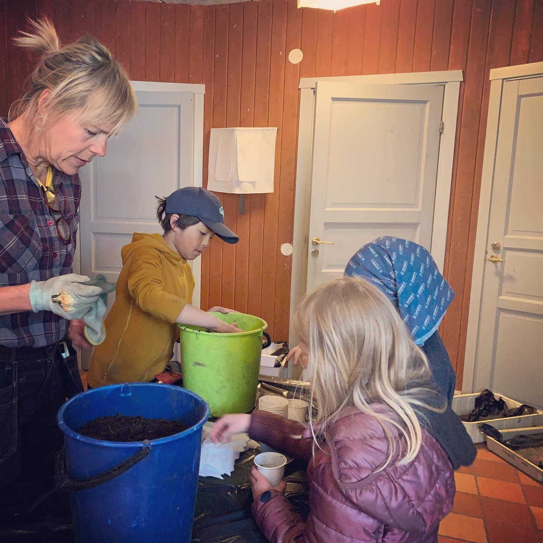 Frösättningen i 2:an är igång! Trädgårdsmästare Kirsi hjälper 2:orna att frösätta massor av ätbart och vackert, som sen ska ner i jorden i 3:ans skolträdgård, där klassen går nästa år. Fortsättning följer på det här! 🌱🥬🌼🌸🥕🥔🌱🥦🌺🥒🌻  #frösättning #waldorfskola #klass2 #klass3 #bondensår #umeåwaldorfskola #waldorfumeå #umeå #waldorf