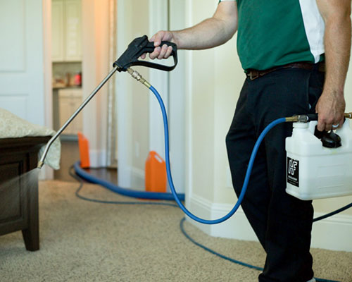Steam Commander team member cleaning carpets in Houston, TX