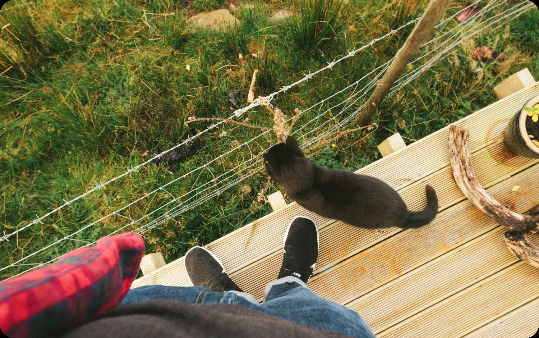 A cute kitty cat sitting on my feet