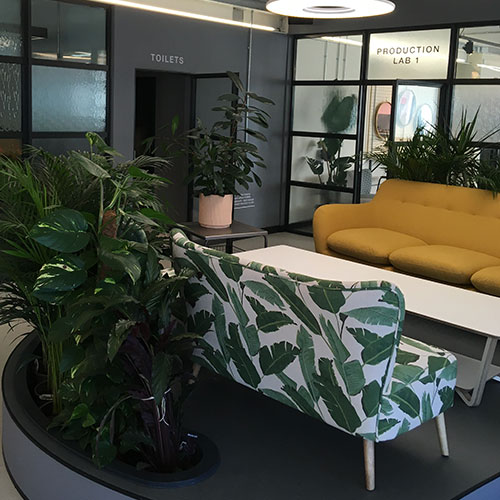 Commercial offices painting and decorating modern dark grey plants and vibrant furniture
