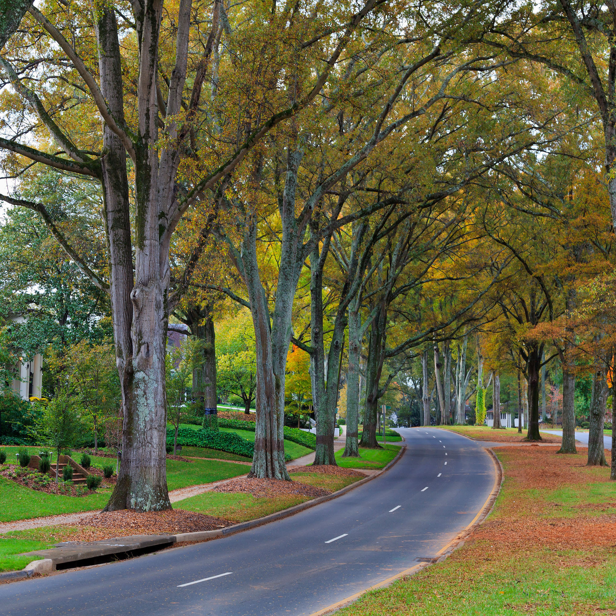 Living In Myers Park - Charlotte, NC