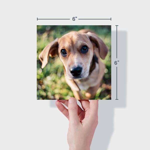 Print 6x6 Dog Photos Online