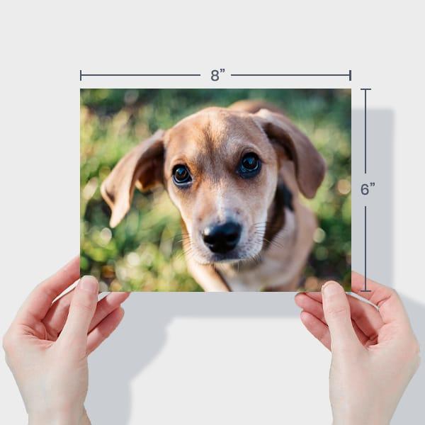 Print 8x6 Dog Photos Online