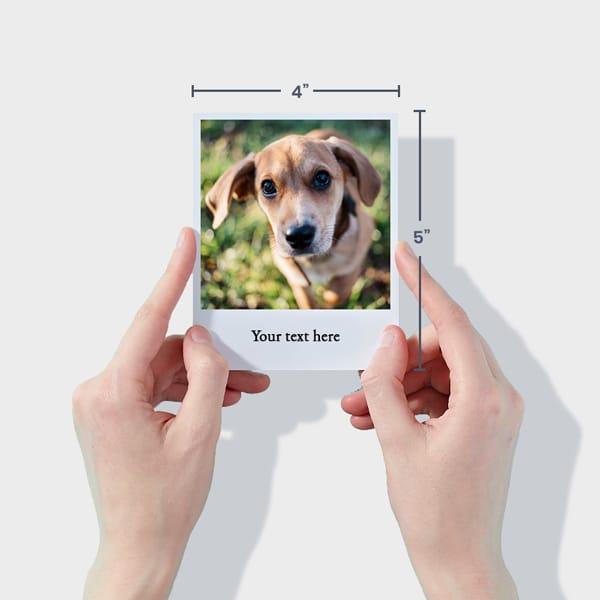 Print Dog Polaroid Photos Online
