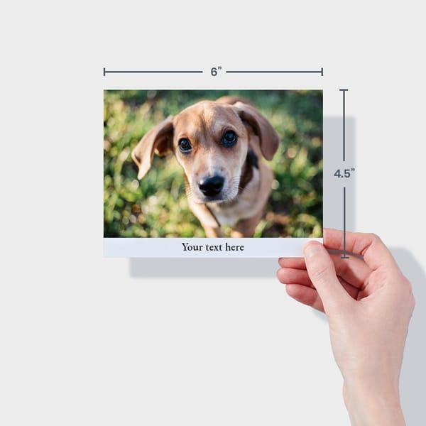 Print Album Prints Dog Photos Online