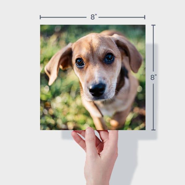 Print 8x8 Dog Photos Online