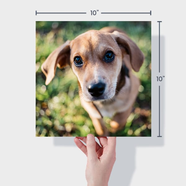 Print 10x10 Dog Photos Online