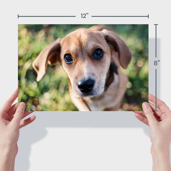 Print 12x8 Dog Photos Online