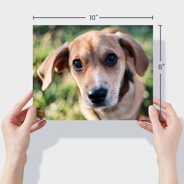 Print 10x8 Dog Photos Online