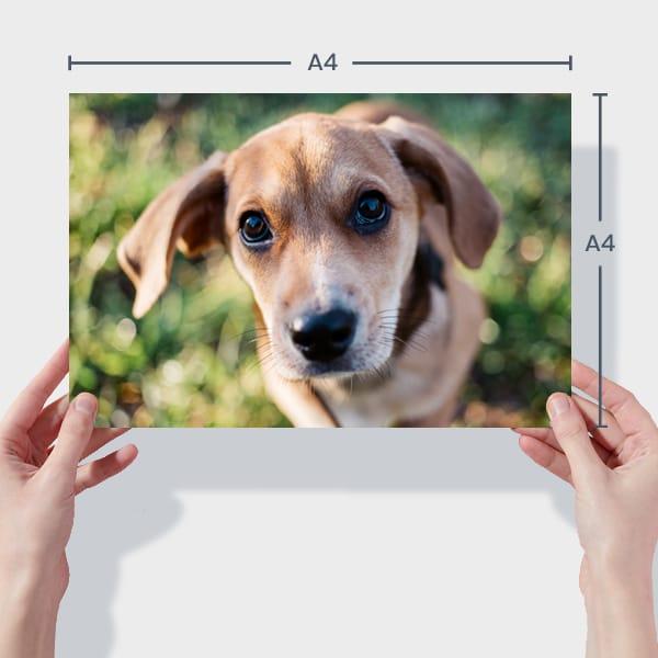 Print A4 Dog Photos Online