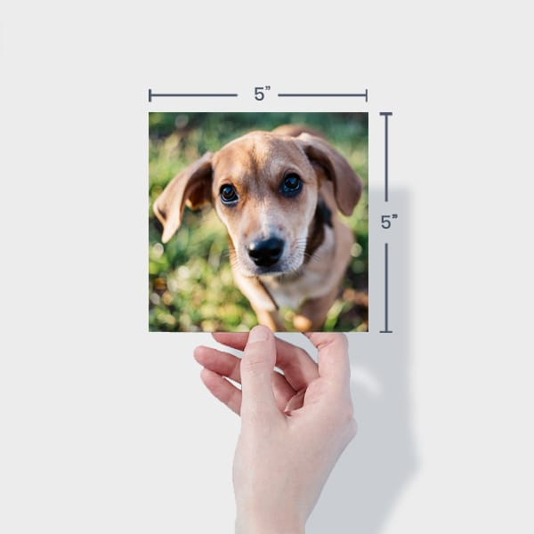 Print 5x5 Dog Photos Online
