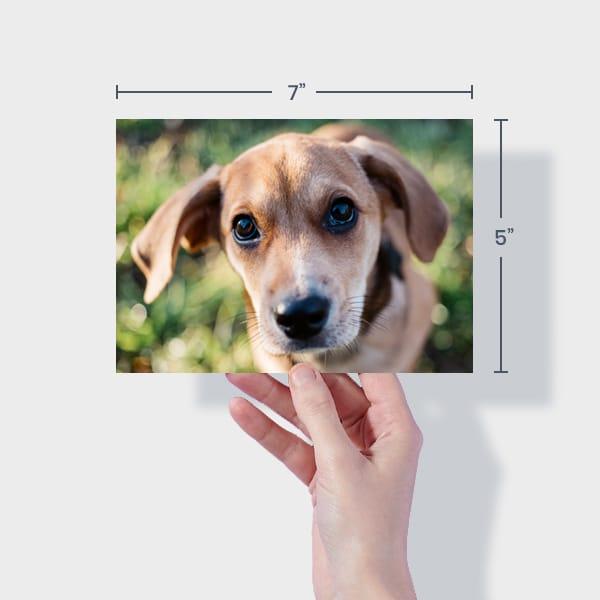 Print 7x5 Dog Photos Online