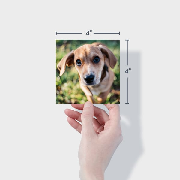 Print 4x4 Dog Photos Online